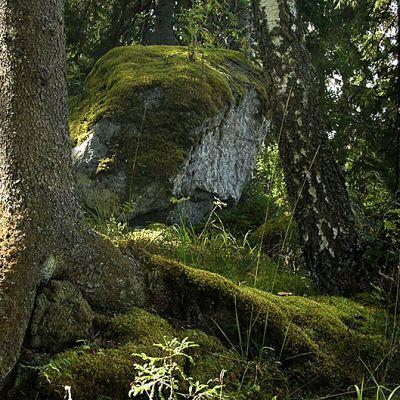 Vanhoja puita ja suuri sammaleinen kivi.