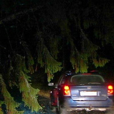 Autot ohittavat myrskytuulen tielle kaataman puun.
