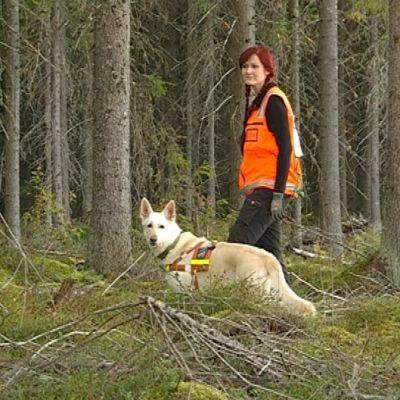 Inca-koira ja ohjaaja Veera Lappi harjoittelevat etsintää metsässä.