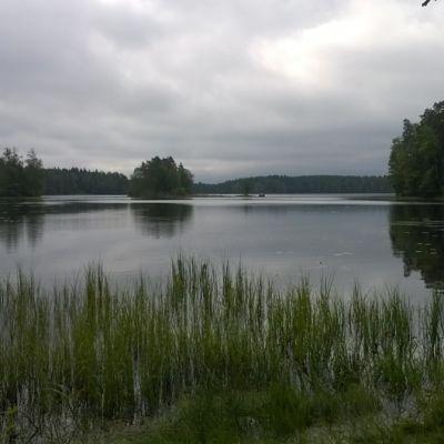 Maisema Tammelan Liesjärven rannasta.