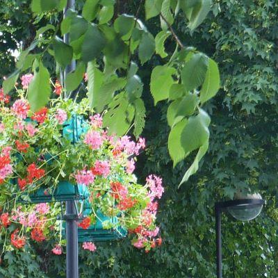 kukka-amppeli Hämeenlinnassa Viipurintiellä