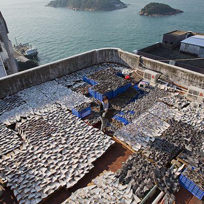 Tuhansia haineviä katolla.