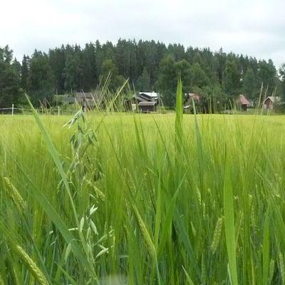 Lavinnon kylää Hausjärvellä
