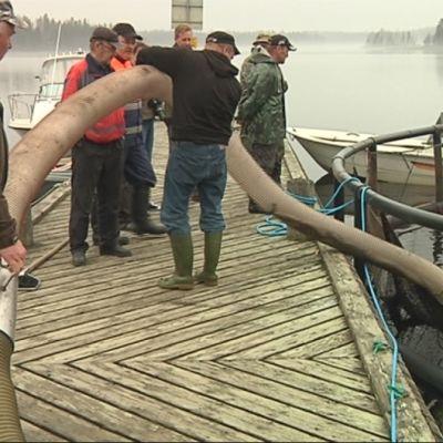 kalanistutus kala järvitaimen järvilohi kalastus Puula järvi kalakannat