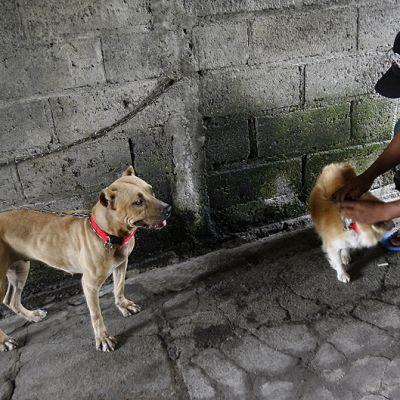Mies odottaa koiriensa kanssa rokotusvuoroaan eläinlääkärille.