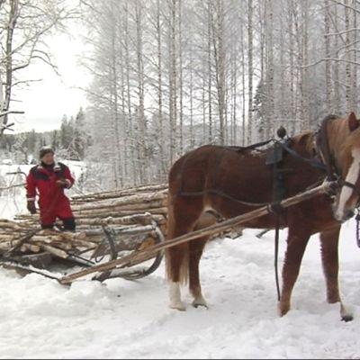 Entinen ravuri Ventterin Vili metsätöissä.