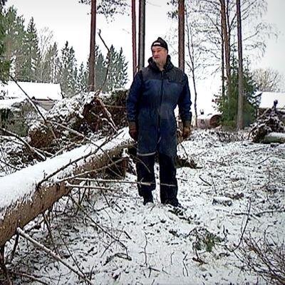 Kaatunut puu maatilan pihalla
