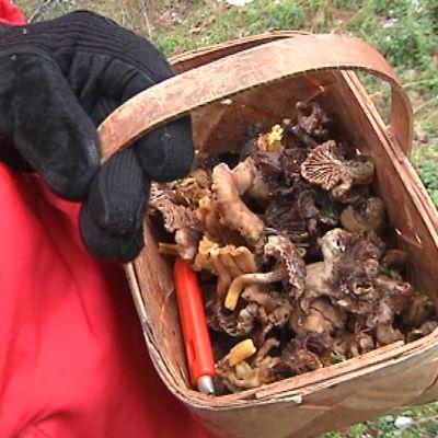 Kouvolan Inkerilän metsästä löytyi sieniä 28. joulukuuta.