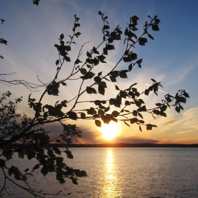 Auringonlasku ja koivunoksa