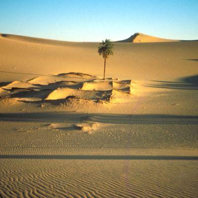 Saharan hiekka-aavikko