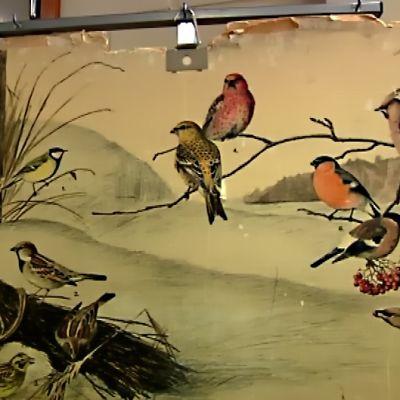 Vanha opetustaulukuva pihapiirin linnuista.