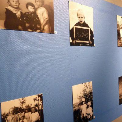 Juurakko-kuvia historiallisen museon seinillä