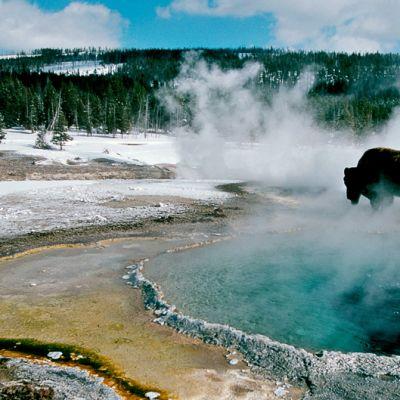 Kuva Avara Luonto -sarja jaksosta Yellowstonen talvi