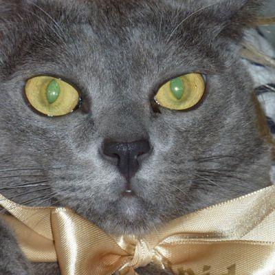 Matso kissan vihreät silmät