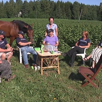 Hevonen syö tarjottimelta