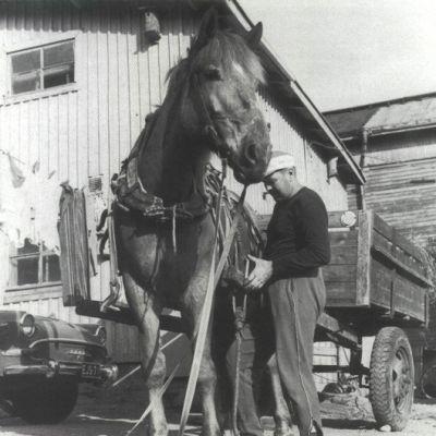 Onni Niemi, hevonen ja halkokärryt