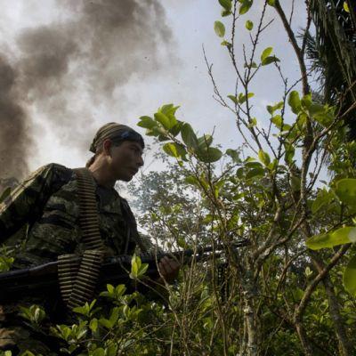 Raskaasti aseistettu Perun huumeidenvastainen poliisi talsii kokapensaiden keskellä.