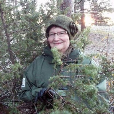 Lapin sieniseuran puheenjohtaja Sirkka-Liisa Peteri