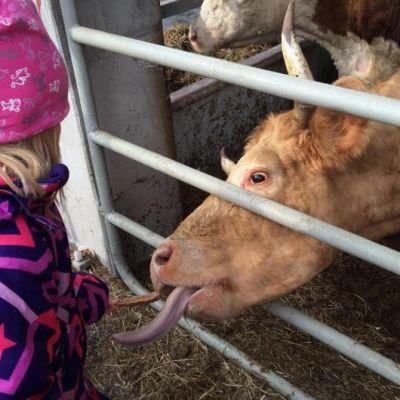 lapsi syöttää leipää lehmälle.