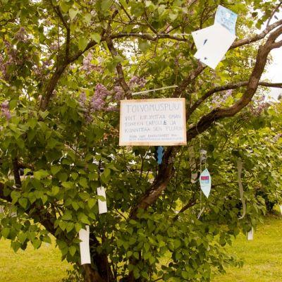 Mikkelin Ristimäenpuiston toivomuspuuhun on jätetty jo useita toiveita