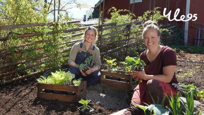 Två kvinnor sitter på huk i en trädgård.