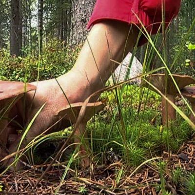 käsi poimii sientä