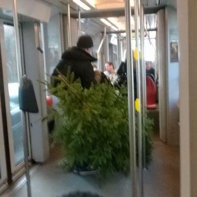 Joulukuusta kuljetetaan raitiovaunussa, ratikka joulukuusi