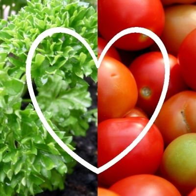 Persiljaa ja tomaattia.