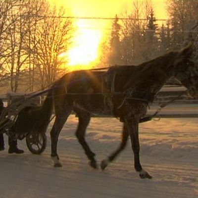 Hevonen lumella
