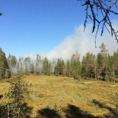 Metsähallitus kulottaa metsää Kuusamossa.