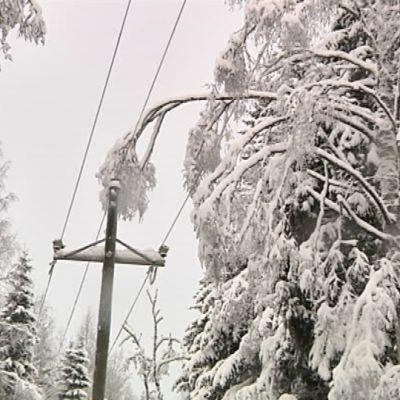 Sähkölinja lumisessa metsässä