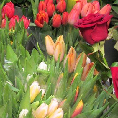 Kuvassa erivärisiä tulppaaneja.