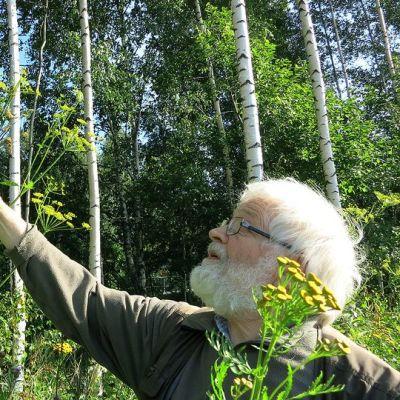 Mies tutkii tien varressa kasvavaa palsternakkaa