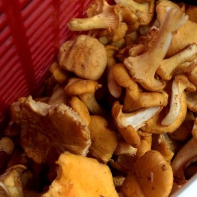 Sientä kopassa