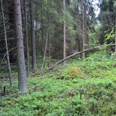 Lapsi seisoo metsässä.