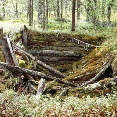 Saksalaisen puukorsun jäänteet maastossa