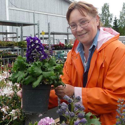 Puutarhuri Eila Kinnunen huolehtii myytävistä kukista