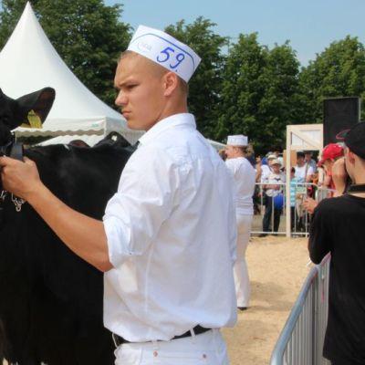 Lehmä Farmari 2015-messuilla Joensuussa.