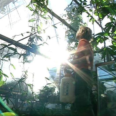 Työntekijä trooppisessa talvipuutarhassa.