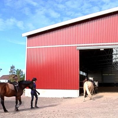 Hevosia menossa sisään maneesirakennukseen.