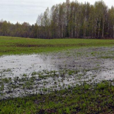 Vettä pellolla.