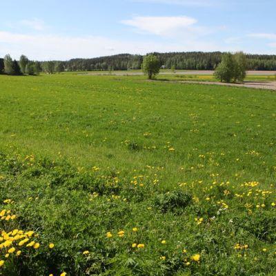 Laukaan Leppäveden kulttuurihistoriallisesti arvokas maisema