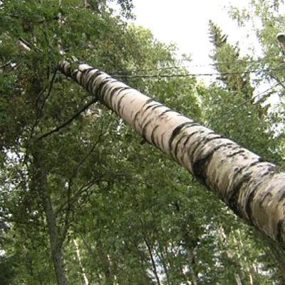 Puu on kaatunut valopylvään sähkölinjalle.