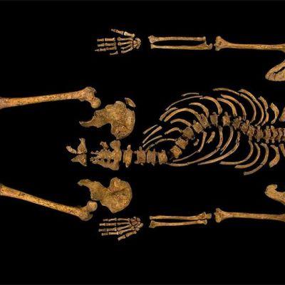 Leicesterin yliopiston kuva Rikhard III:n luurangosta.