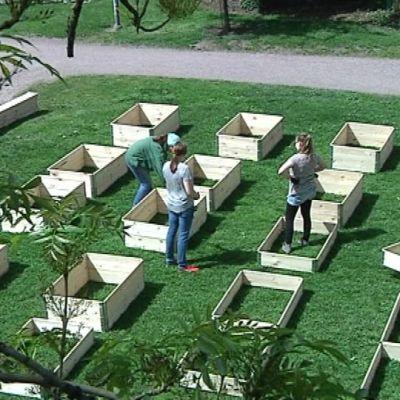 Tyhjiä lavakauluksia Pergerpuiston tulevalla kaupunkiviljelmällä.