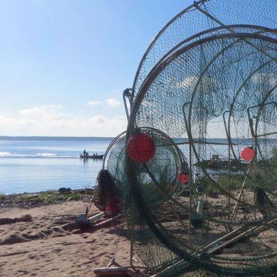 Lohirysä kalastajien tukikohdassa Kemin edustalla.
