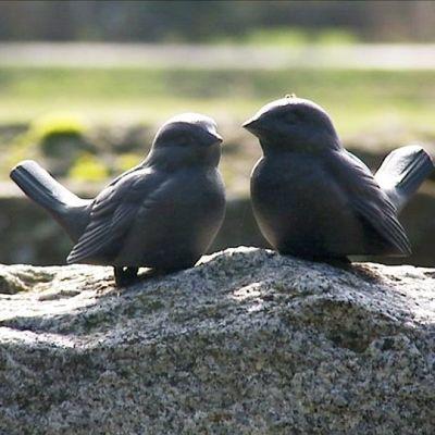 Kaksi lintukoristetta hautakiven päällä.