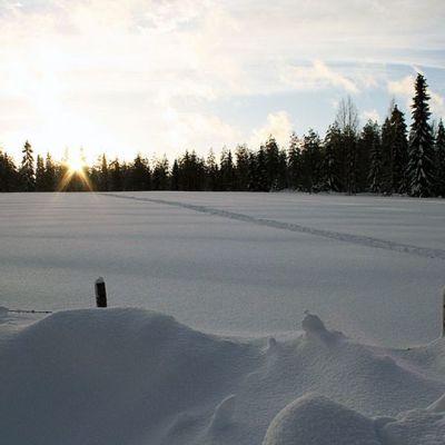 Luminen pelto metsän reunalla auringonlaskussa.