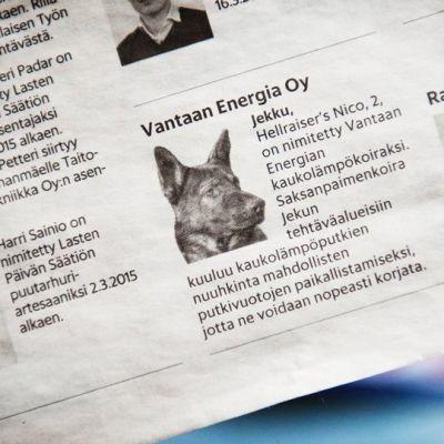 Jekku-koiran nimitysuutinen Hesarissa.