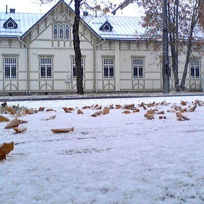 Lumi satanut kadulle, jolla myös kellastuneita lehtiä.